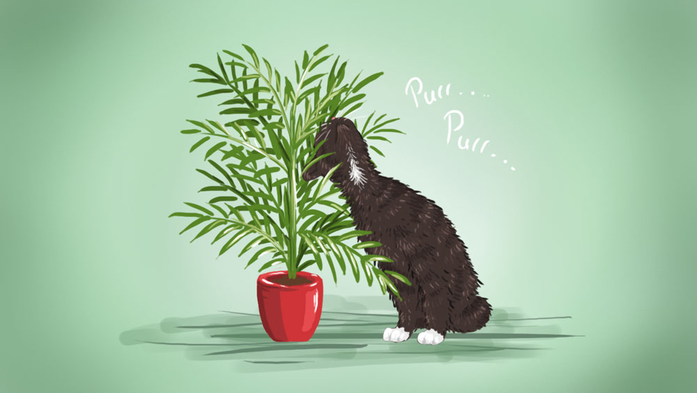 petplant