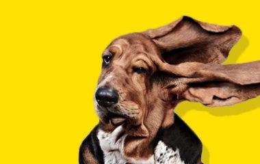 DOG1.jpgthumb