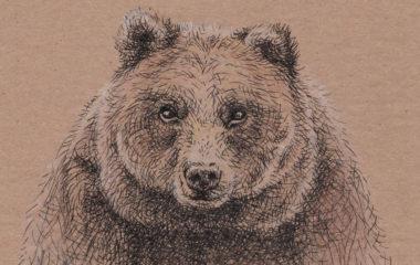 bearthumb3