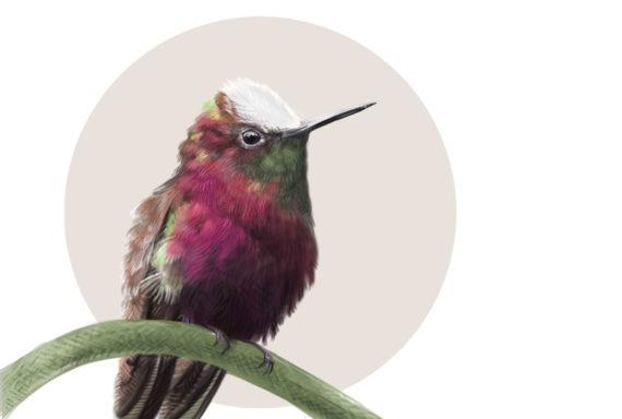 BIRD_5WMthumb