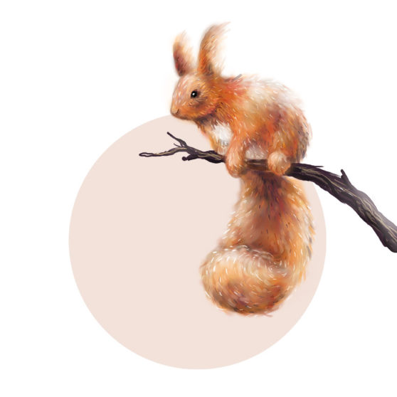 PinkMoonSquirrel