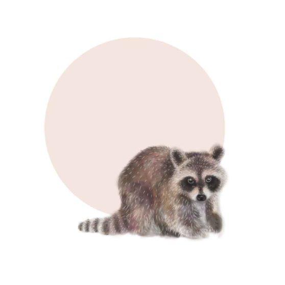 raccoonmoonweb